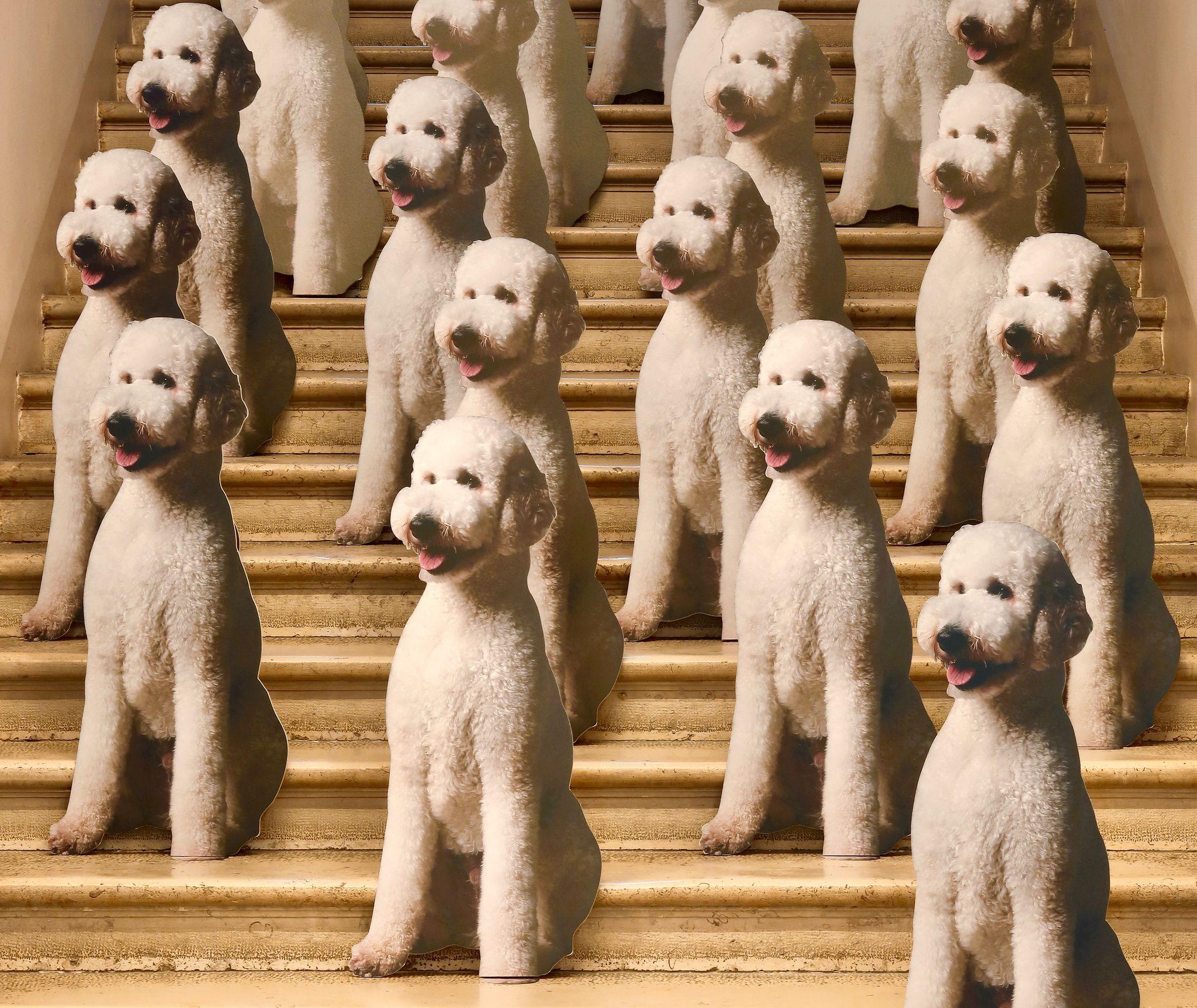 TOP DOG / UNDER DOG